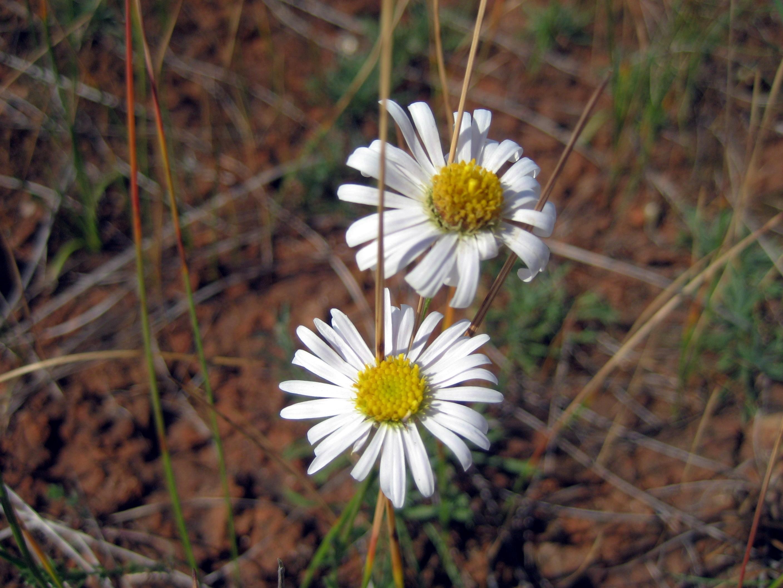 Swamp Daisy Grasslands